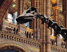 Image of The Natural History Museum,London,England